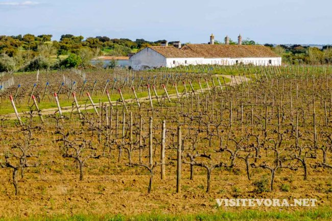 alentejo wine vineyward