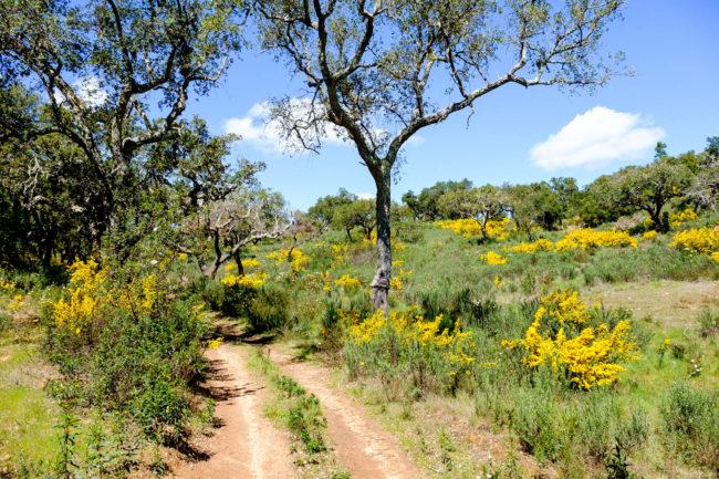 trekking alentejo dirt roads