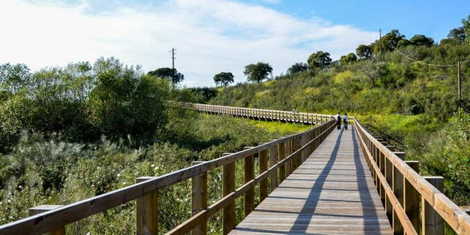 Visit Mora – a municipality that represents Alentejo so well