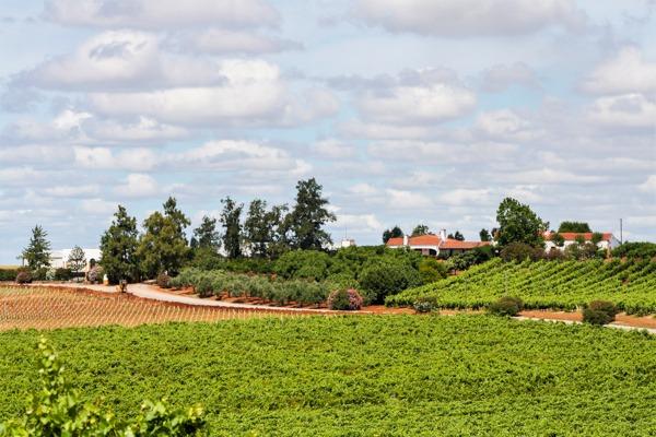 alentejo wine tourism herdade grande