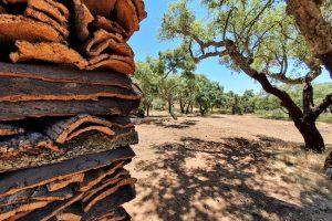cork forest alentejo