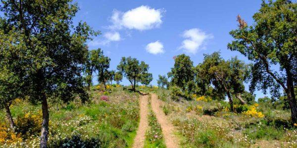 Paseos con guía en los campos de Alentejo