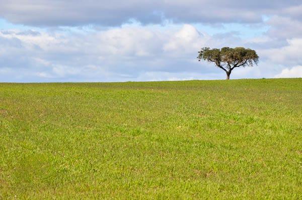 Turismo Rural em Évora e no Alentejo