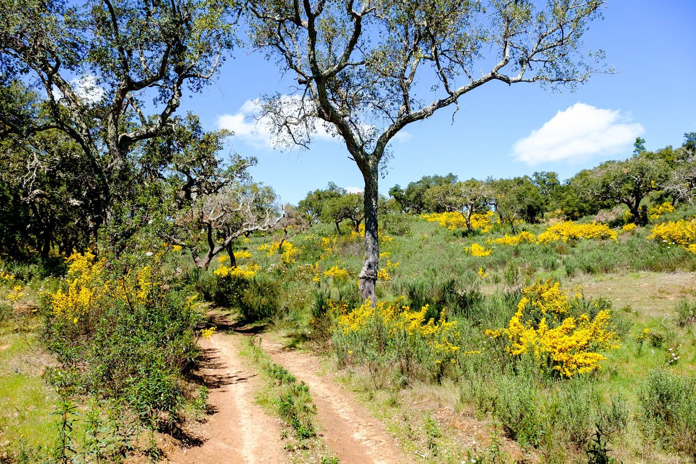 trekking alentejo trilhos