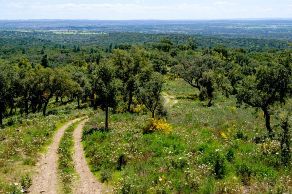 trekking serra dossa trilhos
