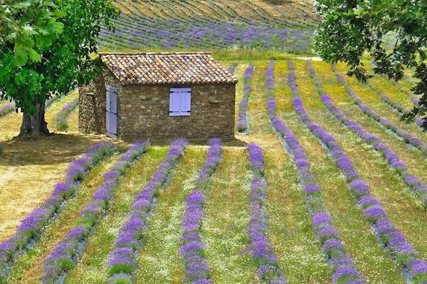 Quinta das Lavandas Castelo Vide turismo rural