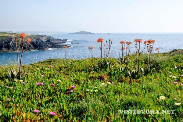 costa alentejana ilha pessegueiro