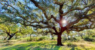 Tour Alentejo – Azeite, Cortiça e Vinho | O melhor da nossa terra